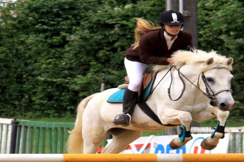 concours cheval
